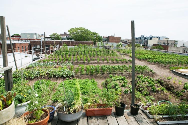 eagle-street-farm