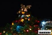 treelighting-20